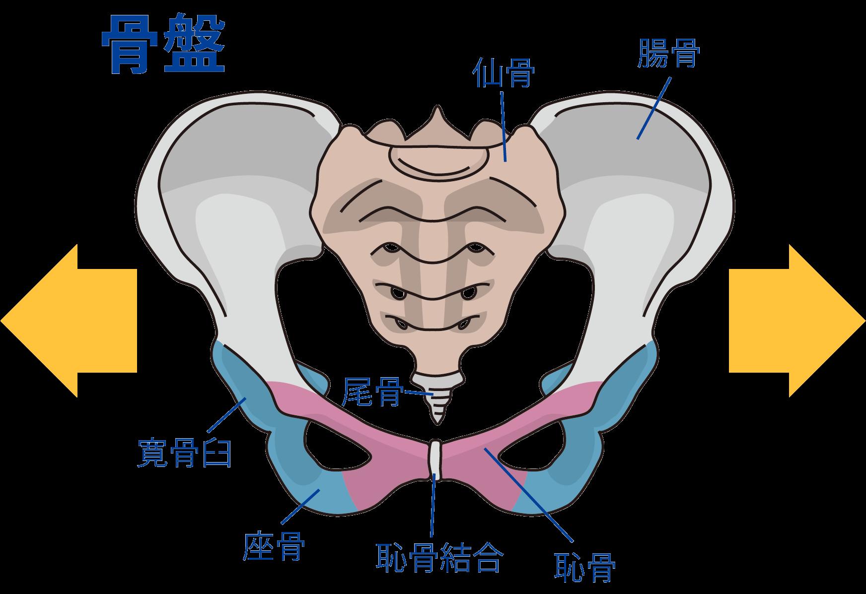 産後の骨盤の歪み